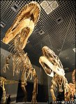 dinosaur-bones