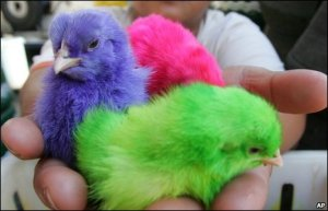 color-chicks2